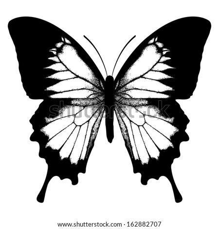 -vector-ulysses... Ulysses Butterfly Tattoo
