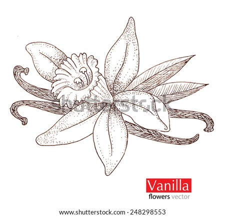 Vanilla beautiful flowers. - stock vector