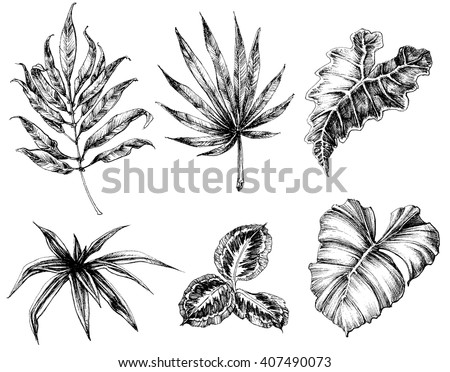 Various leaves hand drawing - stock vector