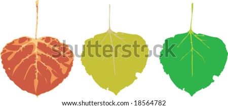 Various vector seasonal colored aspen leaves - stock vector