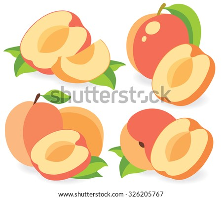 Vector apricots. Collection of cut apricot or peach fruits vector illustrations - stock vector