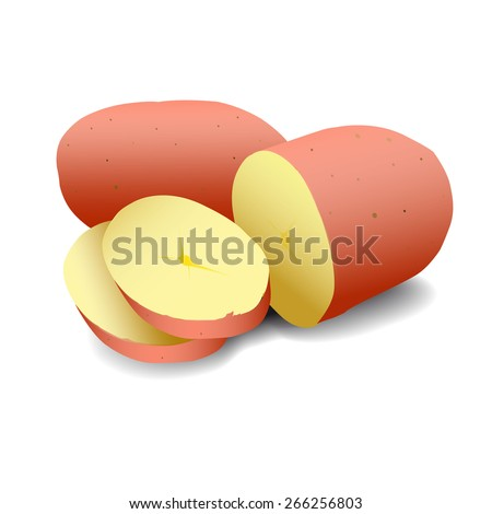 Vector art graphic illustration of fresh potatoes - stock vector
