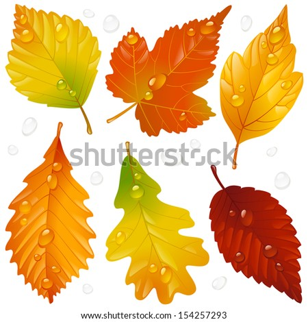 Vector autumn leaf set isolated on white background - stock vector