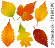 Vector autumn leaves and seamless vein background - stock vector
