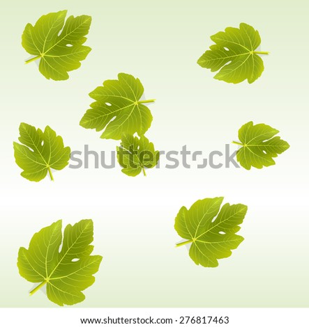 Vector background with Fig leaves. EPS 10 vector - stock vector
