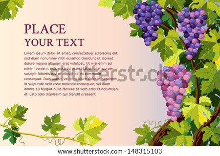 Vector background with grapes bunches and with place for your text - stock vector