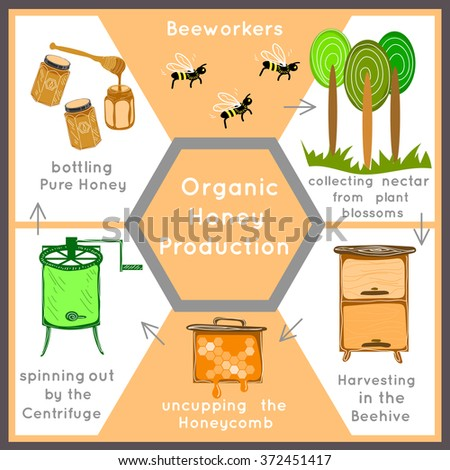 Capilano honey production process