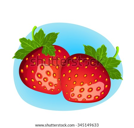 Vector berry illustration. Detailed drawing of strawberry  - stock vector