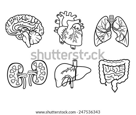 Bacteriophage furthermore Fish Intestine Diagram likewise Bacteriophages as well Earthworm Diagram Worksheet furthermore Clipart Colon. on intestines diagram