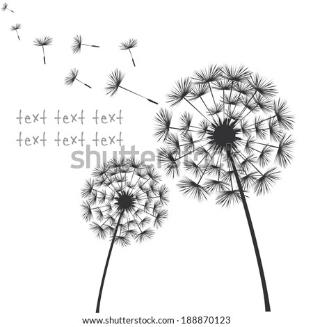 Vector black dandelions on white background - stock vector