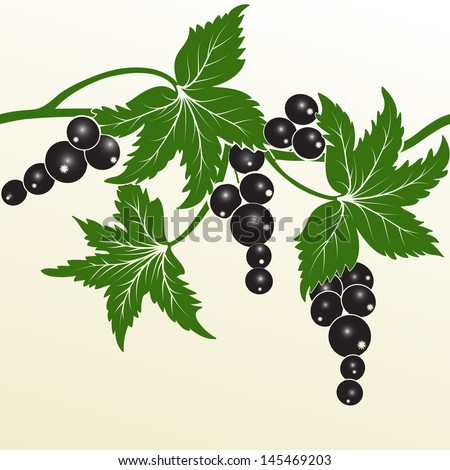 Vector blackberry. Invitation or wedding card with abstract background and elegant blackberry elements. Elements for design. - stock vector