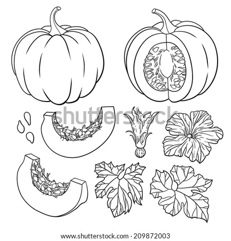 Vector botanical set with isolated  pumpkins, flowers and leaves. Black and white - stock vector
