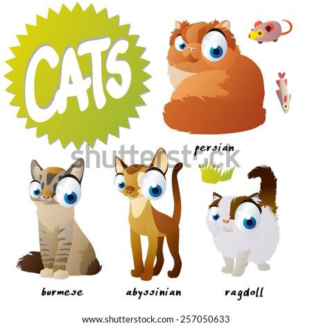 vector cartoon cat set breeds: persian, burmese, ragdoll, abyssinian - stock vector