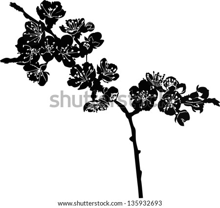Black And White Cherry Blossom Vector Vector Cherry Blossom Branch