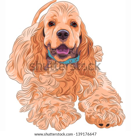 Vector close-up portrait of a  cute sporting  dog breed American Cocker Spaniel smiling - stock vector
