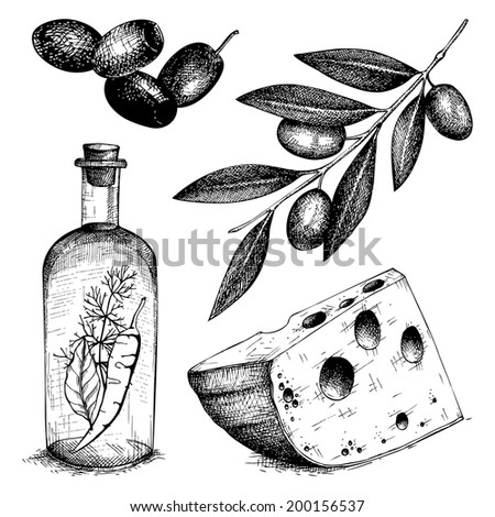 Vector collection of black ink hand drawn olive illustration Vintage healthy food illustration. Decorative  engraved  food isolated on white - stock vector
