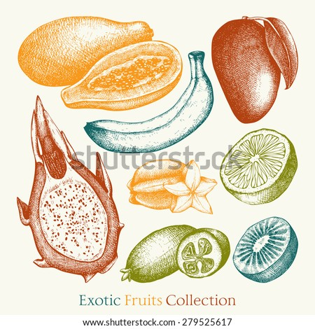 Vector collection of ink hand drawn exotic fruits sketch for kitchen and restaurant design. Vintage colorful tropical fruit illustration for vegetarian food. - stock vector