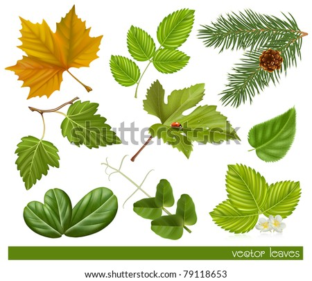 Vector collection of leaves - stock vector