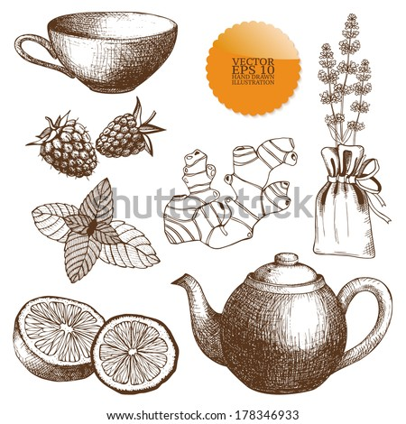 Vector collection of vintage hand drawn tea time and herbs illustrations isolated on white - stock vector