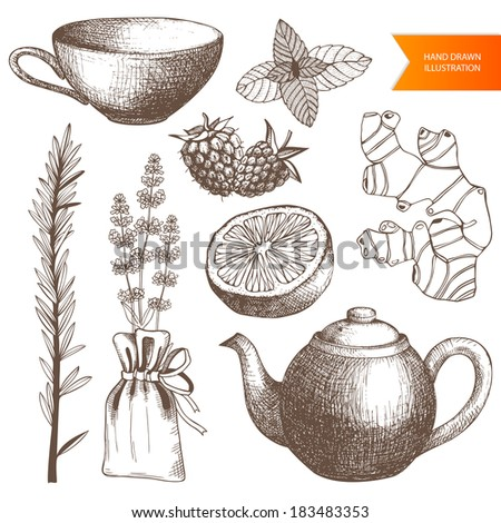 Vector collection of vintage hand drawn tea time and spices illustrations isolated on white - stock vector