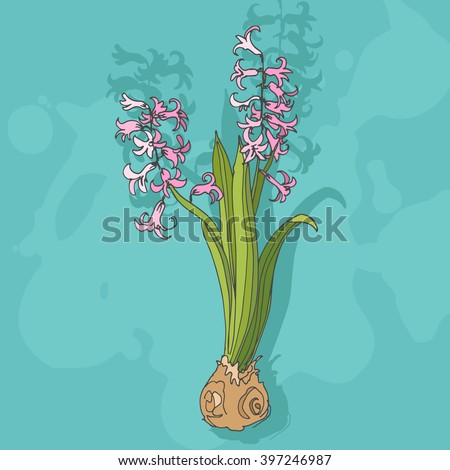 Vector color illustration of the spring blooming flower hyacinth on the blue textured background. Vector hand drawn sketch of the pink hyacinth. Image for greeting cards, postcards, wrapper, design. - stock vector