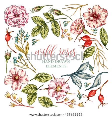 Vector colorful wild rose floral hand drawn elements collection with leaves and flowers. Decorative floral set for fabric, textile, wrapping paper, card, invitation, wallpaper, web design. - stock vector