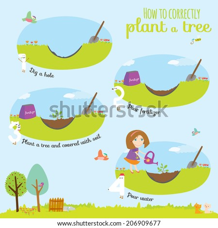 Vector concept illustration with time line infographic of planting tree process. Step instruction. Girl planting a tree. Cute illustration can be used like game in school. - stock vector