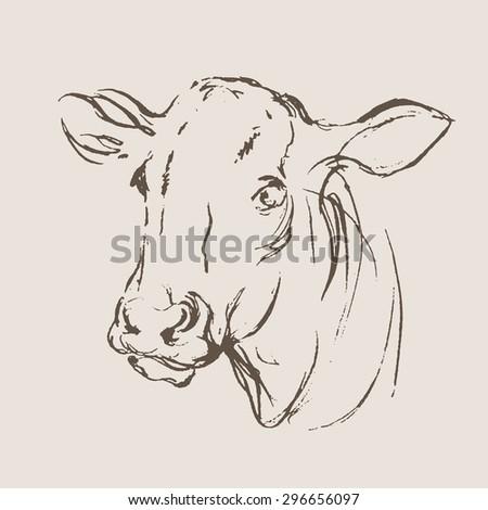 vector cow hand draw sketch  - stock vector