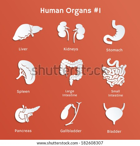 Vector cut-out paper icons of internal human organs - stock vector