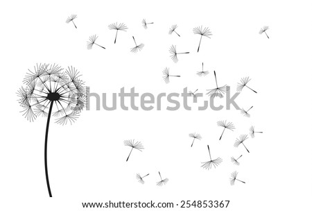 Vector dandelion, black eps illustration on white background. - stock vector