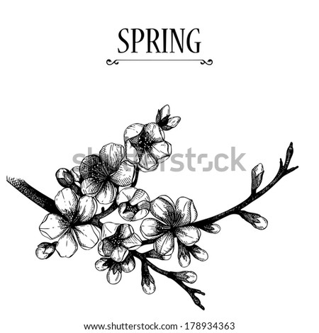 Vector design for your card or invitation with hand drawn blooming  fruit tree twig illustration. Isolated on white. - stock vector