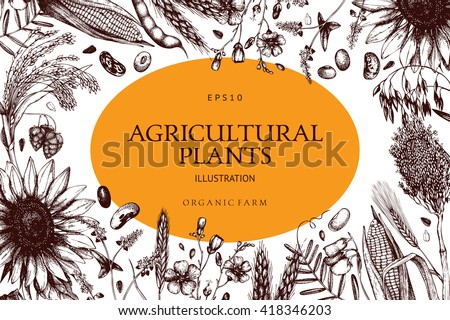 Vector design with ink hand drawn agricultural plants sketches. Vintage illustration with legumes, cereal crops, sunflower and flax. Farm fresh and organic plants template. - stock vector