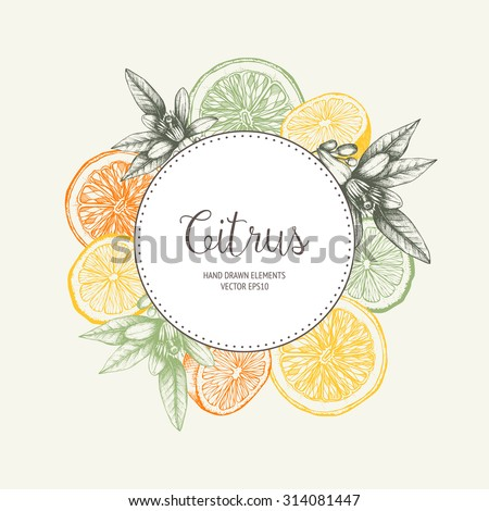 Vector design with ink hand drawn orange fruit, flowers and leaves sketch. Vintage citrus background in pastel colors - stock vector