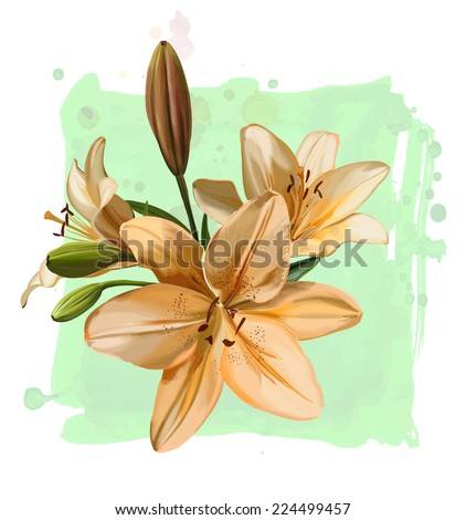 Vector drawing branch lily flowers on watercolor background - stock vector