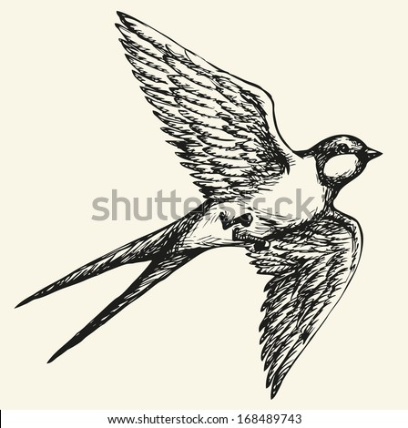 "Vector drawing of a series of monochrome sketches ""Birds"". Swallows and martins are a group of passerine birds in the family Hirundinidae which are characterised by their adaptation to aerial feeding - stock vector"