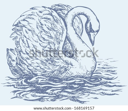 "Vector drawing of a series of monochrome sketches ""Birds"". Swan are bird of the family Anatidae within the genus Cygnus - stock vector"