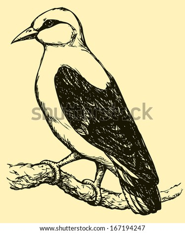 """Vector drawing of a series of monochrome sketches """"Birds"""". The Eurasian Golden Oriole is the only member of the oriole family of passerine birds breeding in northern hemisphere temperate regions - stock vector"""