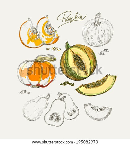 Vector drawing of beautiful colorful pumpkins - stock vector