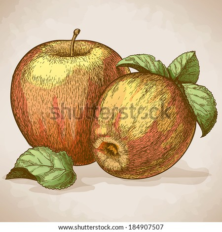 vector engraving illustration of  two red apples and leaves - stock vector