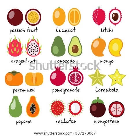 vector exotic fruits collection - stock vector
