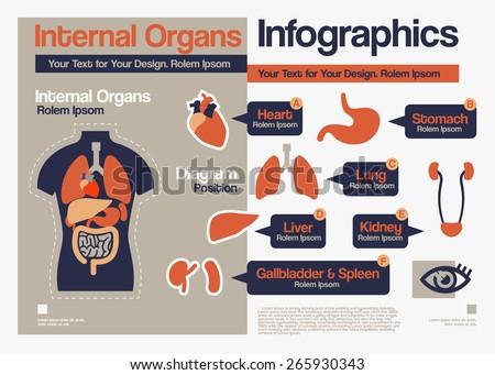Vector Flat Design about Internal Organs Infographics. - stock vector