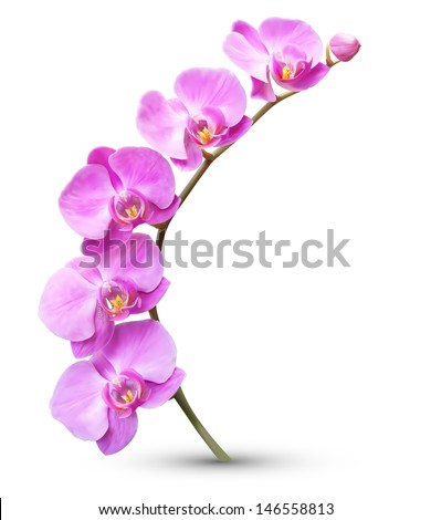 Vector flower exotic orchid branch - stock vector