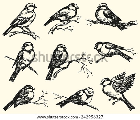 "Vector freehand drawing of series of monochrome sketches ""Birds"". Tits, chickadees, sparrows, bullfinches and titmice constitute Paridae, a large family of small passerine birds  - stock vector"