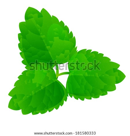 Vector fresh mint leaves on a white background - stock vector