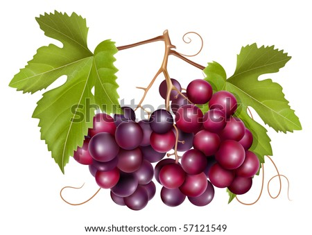 Vector. Grape cluster with green leaves. - stock vector