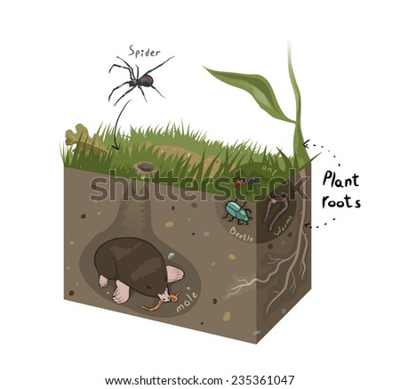 Vector graphic diagram of soil structure - stock vector