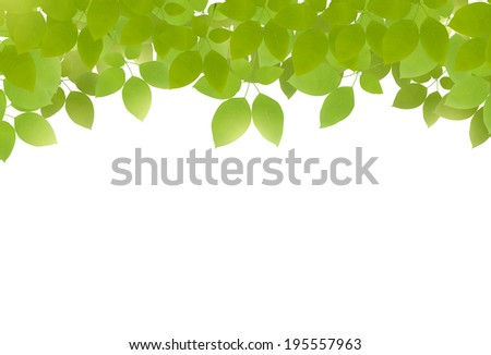 Vector green leaves on top on white background. Fresh green leaves.  - stock vector