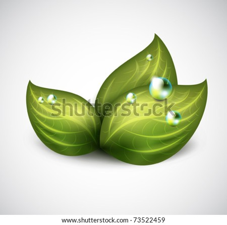 vector green leaves with drops of water - icon - stock vector