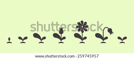 Vector green plant growing seed foliage flower small set - stock vector