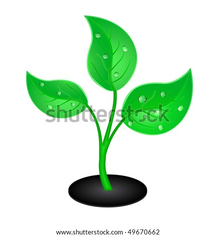 vector green plant with drops - stock vector